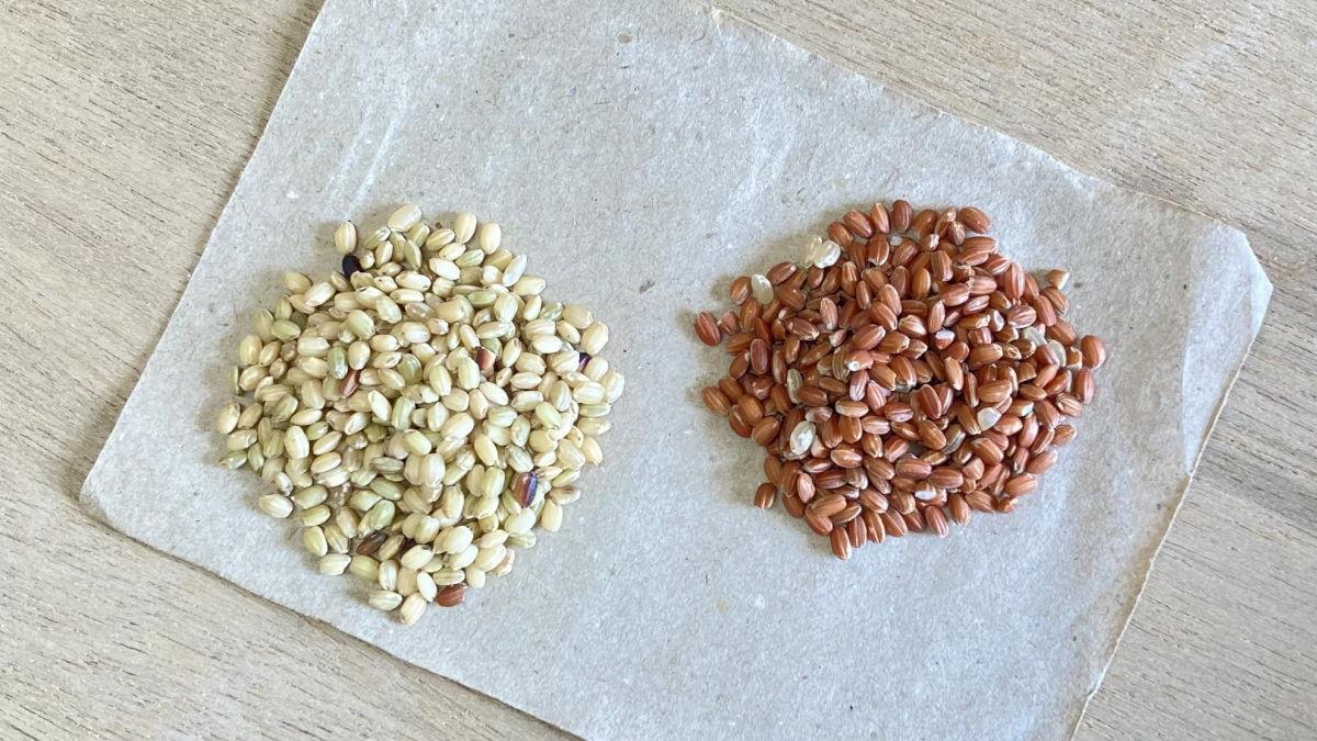 【量り売り】国産の古代米(赤米、緑米)販売しています